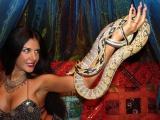 Восточное шоу со змеей (питоном) на новогодний корпоратив