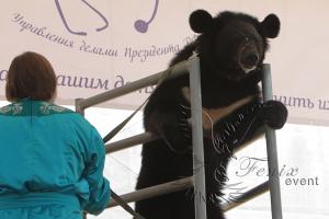 Дрессированный медведь на детский праздник